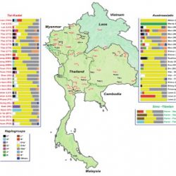 Contrasting paternal and maternal genetic histories of Thai and Lao populations